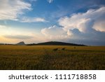 summer landscape with wheat... | Shutterstock . vector #1111718858