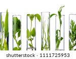 green fresh plant in glass test ... | Shutterstock . vector #1111725953