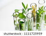 green fresh plant in glass test ... | Shutterstock . vector #1111725959