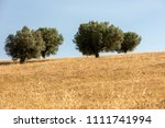 view of olive groves and... | Shutterstock . vector #1111741994