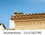 wildflowers on the roof | Shutterstock . vector #1111762790
