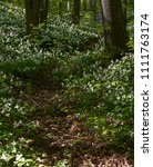 Small photo of Forest trail and Trillium Flowers