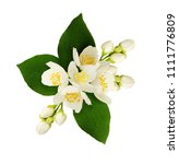 jasmine flowers and leaves in... | Shutterstock . vector #1111776809