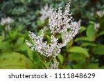 white flower hd | Shutterstock . vector #1111848629