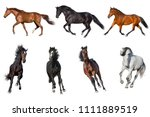 Stock photo horse collection isolated on white background 1111889519