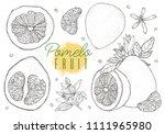 set vector hand drawn pomelo...   Shutterstock .eps vector #1111965980