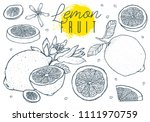 fruit lemons set hand drawn... | Shutterstock .eps vector #1111970759