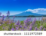 fuji mountain and lavender... | Shutterstock . vector #1111972589