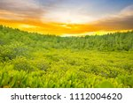 forest with sunset sky | Shutterstock . vector #1112004620