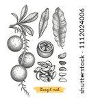 ink sketch of brazil nut. hand... | Shutterstock .eps vector #1112024006
