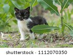 nature   black little grumpy... | Shutterstock . vector #1112070350