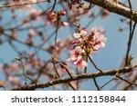 in springtime  beautiful cherry ... | Shutterstock . vector #1112158844