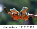 tree frog  flying frog  animal | Shutterstock . vector #1112181128
