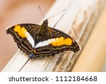close up macro photography of a ... | Shutterstock . vector #1112184668