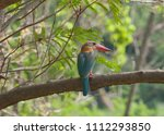 stork billed kingfisher ... | Shutterstock . vector #1112293850