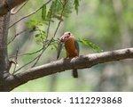 stork billed kingfisher ... | Shutterstock . vector #1112293868