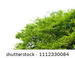 green leaves isolated on white | Shutterstock . vector #1112330084