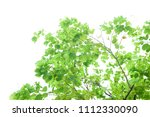 green leaves isolated on white | Shutterstock . vector #1112330090
