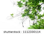 green leaves isolated on white | Shutterstock . vector #1112330114
