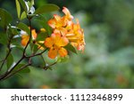 yellow flowers on a green... | Shutterstock . vector #1112346899
