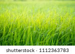 green grass background for...   Shutterstock . vector #1112363783