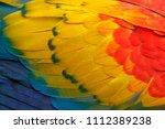 close up detail of parrot... | Shutterstock . vector #1112389238