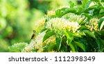 small bird on the tree. flowers ... | Shutterstock . vector #1112398349