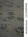 Small photo of Stromatolites in Lake Thetis (Nam bung National Park Western Australia)