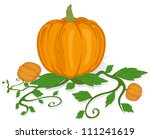 the big ripe pumpkin on a white ... | Shutterstock .eps vector #111241619