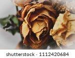 Herbarium. A Beautiful Bouquet...