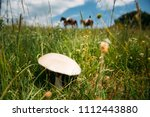 collecting fresh mushrooms on a ... | Shutterstock . vector #1112443880
