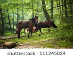 horses group in green forest   Shutterstock . vector #111245024