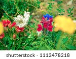 bed of beautiful different... | Shutterstock . vector #1112478218