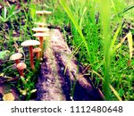 Close Up Of Mushrooms In Green...