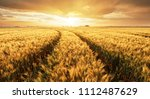 Panorama Of Wheat Field At...