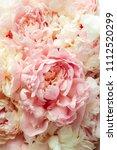 fluffy pink peonies flowers...   Shutterstock . vector #1112520299