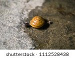 Small photo of Snail crawl on the floor.