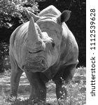 the white rhinoceros or square...   Shutterstock . vector #1112539628