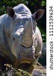 the white rhinoceros or square...   Shutterstock . vector #1112539634