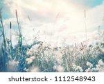 wild blossoming grass in field...   Shutterstock . vector #1112548943