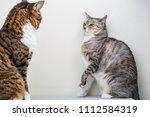 Annoyed Cat Cornered