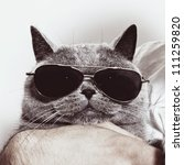 Stock photo funny muzzle of gray british cat in sunglasses closeup 111259820