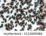 close up of many fly on the... | Shutterstock . vector #1112600486