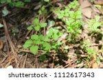 green nature view | Shutterstock . vector #1112617343