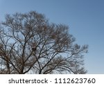 tree branch silhouette over sky. | Shutterstock . vector #1112623760