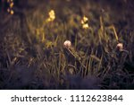 flower clover. selective focus. ... | Shutterstock . vector #1112623844