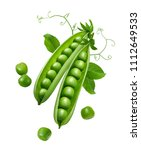 Green Peas In Pods With Sprouts ...