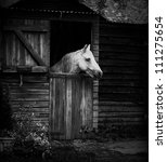 Beautiful Horse In A Stable In...