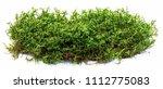 green moss isolated on white... | Shutterstock . vector #1112775083