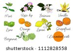 vector drawn essential oils... | Shutterstock .eps vector #1112828558